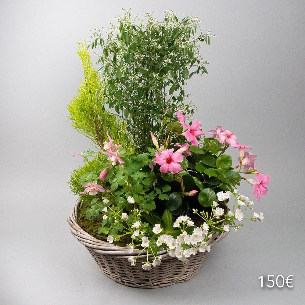 coupe-de-plantes-150