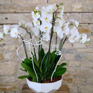 coupe-orchidees-blanches-atelier-lavarenne-fleuriste-lyon