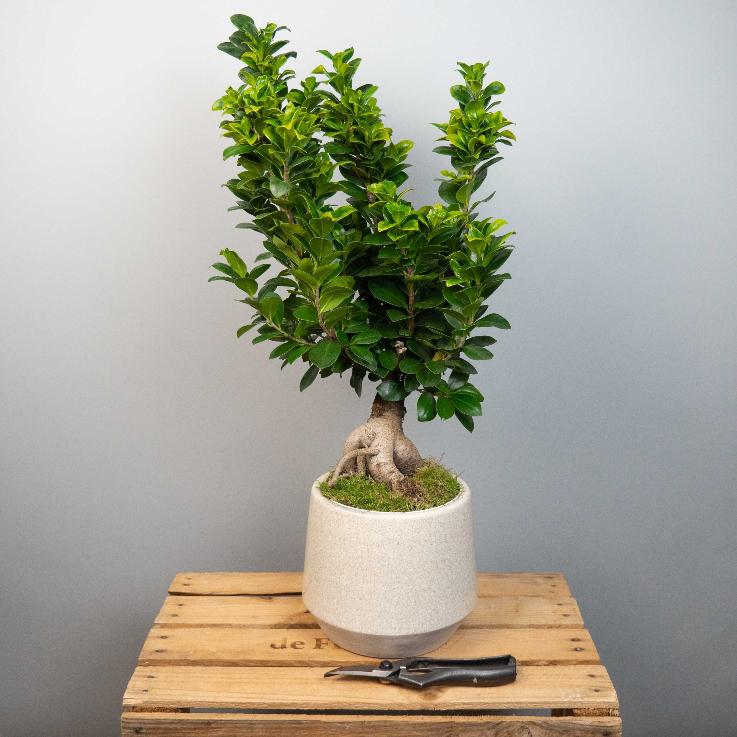 plante-verte-surprise-55€-atelier-lavarenne-fleuriste-lyon-2