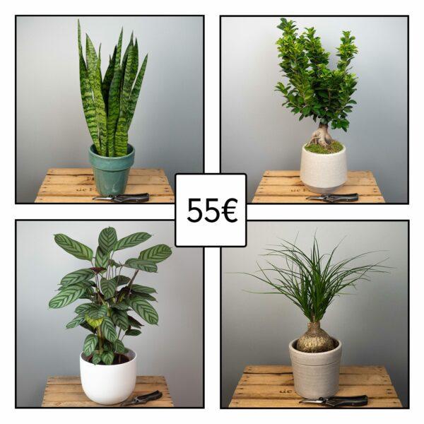 plante-verte-surprise-55€-atelier-lavarenne-fleuriste-lyon
