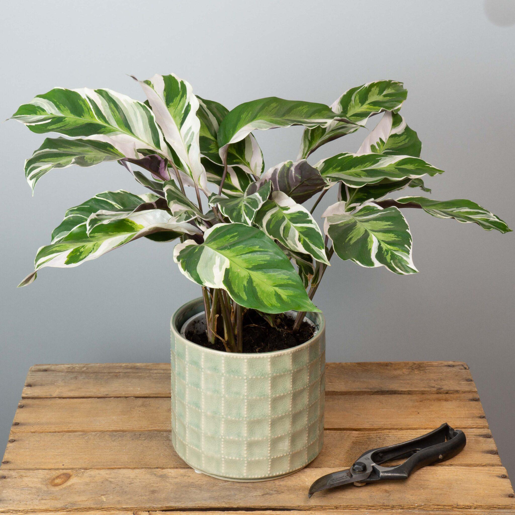 plante-verte-surprise-65-euros-atelier-lavarenne-fleuriste-lyon-4