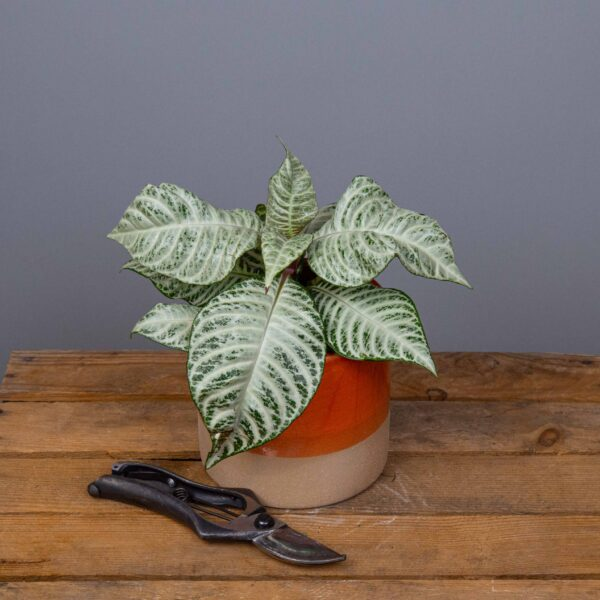 plante-verte-surprise-35-euros-atelier-lavarenne-fleuriste-lyon