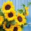 bouquet du moi 2 tournesol atelier lavarenne fleuriste lyon